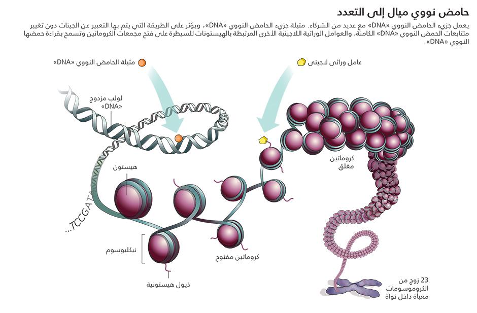 الوراثة اللاجينية قراءة الترميز الجينومي الثاني Technology