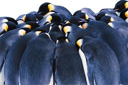 الفيزياء: لماذا تؤدي طيور البطريق
