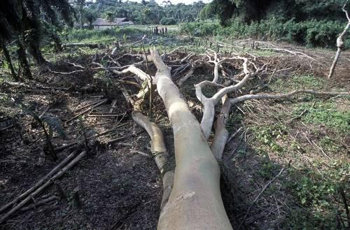 يقول الخبراء إنَّ الحدّ من إزالة الغابات (موضَّحة في الصورة، الملتقَطة من غابةٍ مدارية مطيرة بحوض الكونغو) يمكن أن يقلل من احتمال ظهور جوائح مستقبلية.