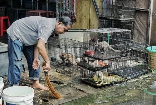 يعتمد الكثيرون على أسواق الحيوانات البرية كمصدرٍ للرزق، مثل هذا السوق الموجود في مقاطعة بالي الإندونيسية.