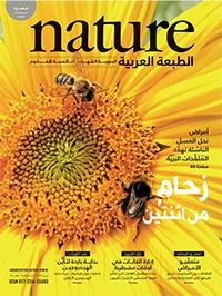 الأعداد الكاملة من Nature الطبعة العربية 58c0e9ffa0c274ea0f8b45a4
